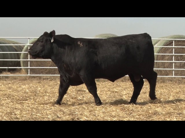 Express Ranches Lot 454