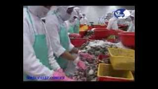 Shrimp Production and Processing in Vietnam