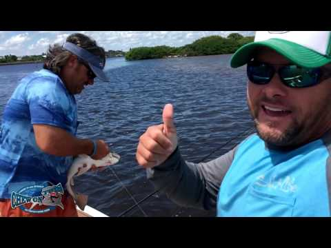 Net Fishing - Cast Netting Fishing for Saltwater Catfish Ladyfish and Redfish - Stuart Florida