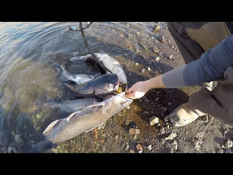 Catching Catfish From Bed?! - Random Fishing Adventures Pt. 1