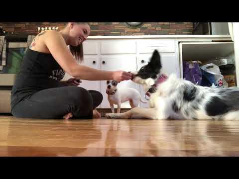 Official Kiss Expert Tricks Dog   DMWYD
