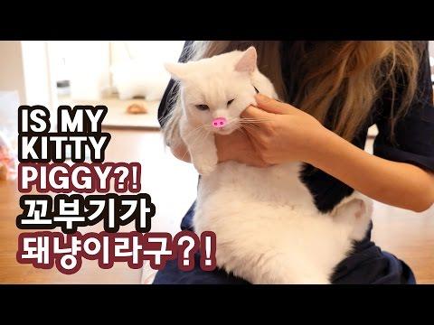 꼬부기가 돼냥이라구?! 돼지 고양이 오해풀기 IS MY CAT PIGGY?