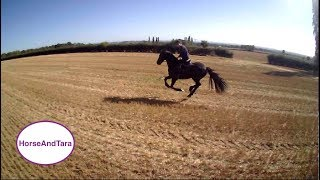 Friesian Horse Galloping. Part One