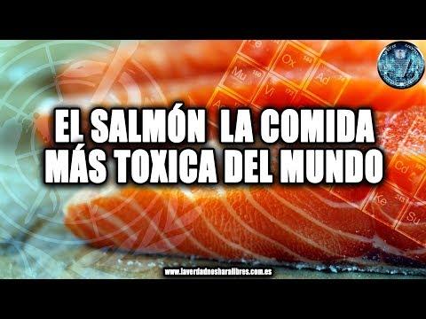 EL SALMÓN LA COMIDA MÁS TÓXICA DEL MUNDO