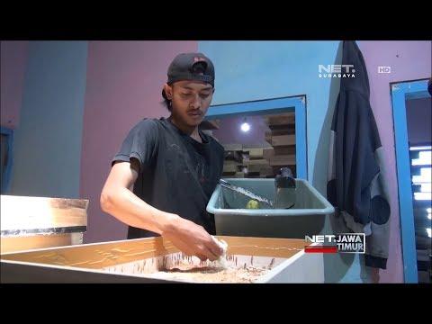 NET. JATIM - PELUANG USAHA BUDIDAYA ULAT JERMAN
