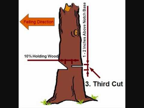 tree felling simple notch and back cut technique wmv youtube rh youtube com Notching a Tree for Felling Plunge Cutting Trees