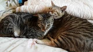 Funny cats: Big sister and brother cuddling together
