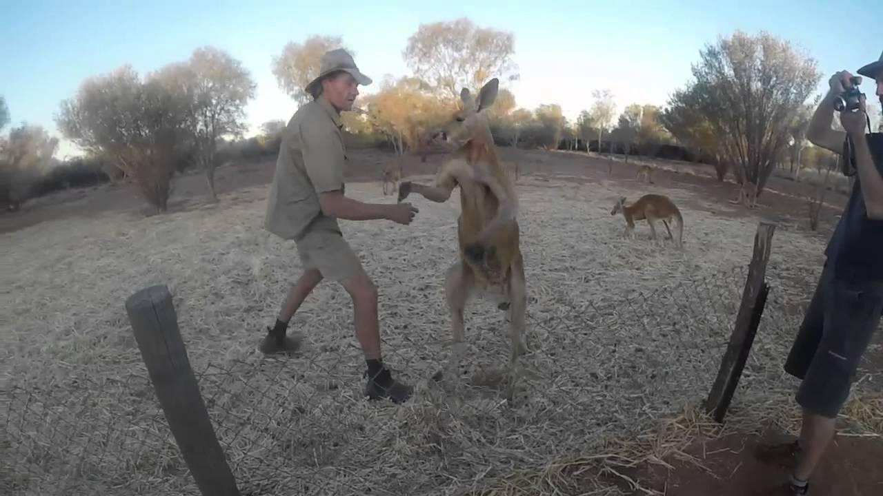 Kangaroo Sanctuary Alice Springs YouTube - Kangaroo sanctuary alice springs