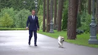"""""""Это Айк"""". Медведев показал щенка алабая, которого ему подарил президент Туркменистана"""