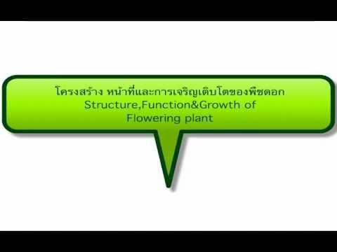 โครงสร้างหน้าที่ของพืชดอก part1