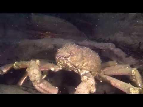 La Jolla Shores Night Dive Raw Footage