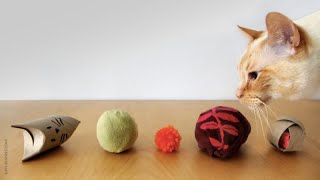 5 Easy Cat Toys Under 3 Minutes