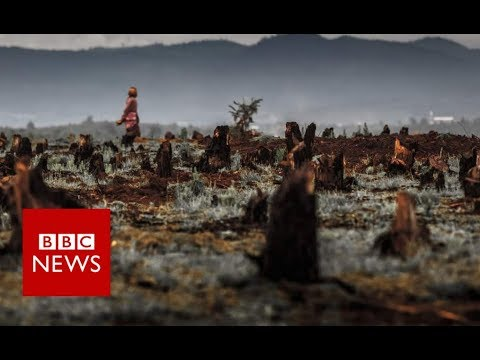 Vanilla Thieves Of Madagascar 