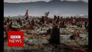 Vanilla Thieves Of Madagascar (Full Documentary) - BBC News