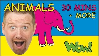 Safari Animals + More | Animal Songs for Children by Steve and Maggie | Collection Stories for Kids