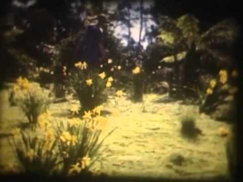 Daniel Stefanik - Four [Kann]