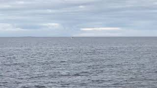 Dolphins at Prestwick Beach 14th September 2020