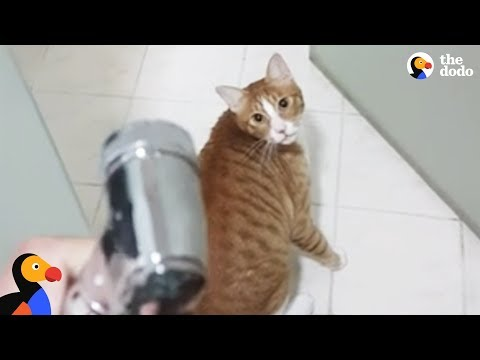Funny Cat Begs to Play in Shower | The Dodo