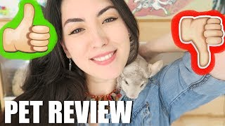 Baixar CHINCHILLAS | THE RIGHT PET FOR YOU? | PET REVIEW