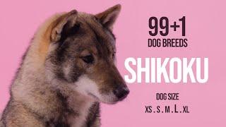 Shikoku / 99+1 Dog Breeds
