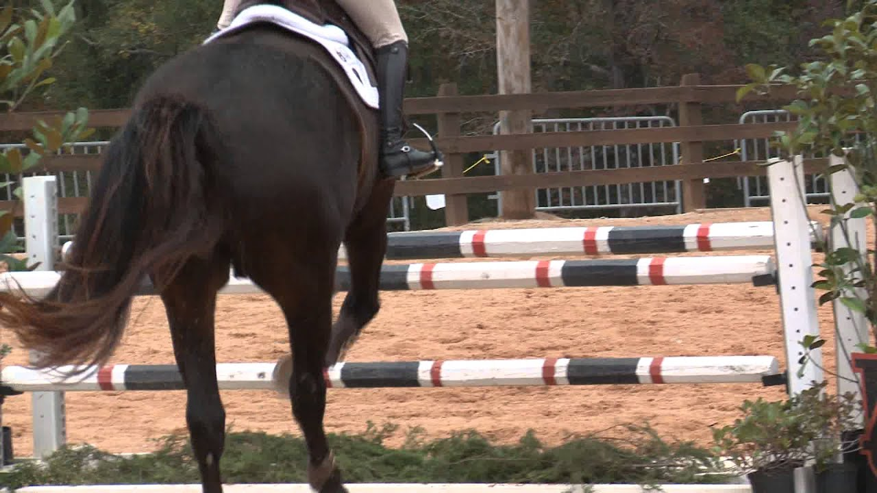 Auburn Equestrian Vs Georgia Highlights Youtube