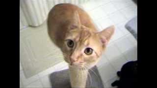 Японская реклама корма для кошек