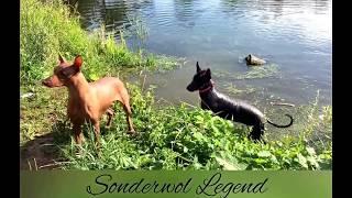 Xolo x PSPP/ Ксоло и Перуанская Голая собака