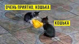 МЫ ЖРАТЬ ИДЁМ?))) Приколы с котами   Мемозг 800