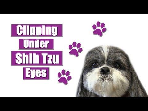 Clipping Underneath Shih Tzu Eyes