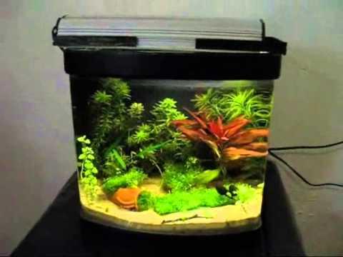 Cubo acquario 15 litri caridinaio low cost cube aquarium for Vaschetta pesci rossi offerte