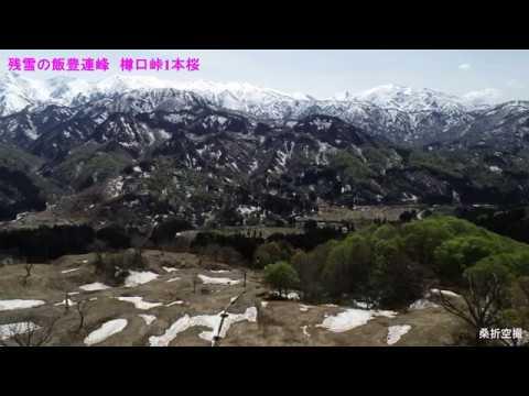 空撮:2019 山形県小国町 絶景 残雪の飯豊連峰🌸樽口峠1本桜🌸