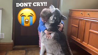 Baby Does Everything He Can To Stop Husky Crying! [CUTEST VIDEO EVER!!]