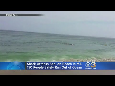 Shark Attacks Seal On Beach In Massachusetts