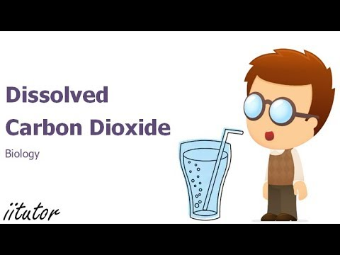 √  The Effect of Dissolved Carbon Dioxide on the pH of Water | iitutor