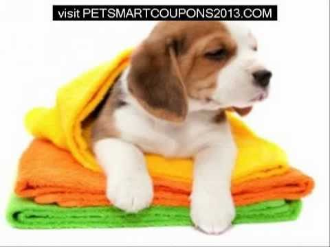 Petsmart Grooming Coupons 2013 – Save Budget and Make Your Pet Look Great