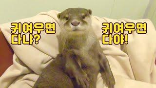 수달 수영장청소, 청개구리 수다리들[돌체♥라떼 일기;한…
