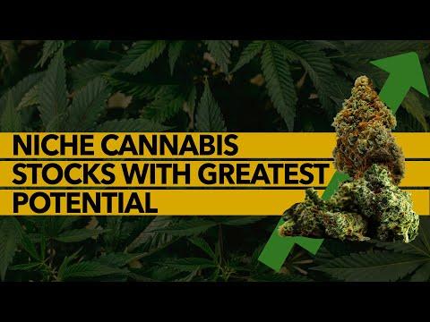 Niche Cannabis Stocks