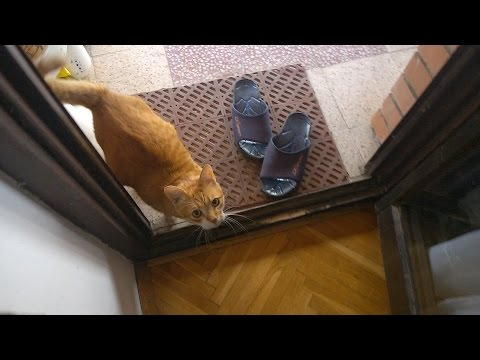 cat is happy to see owner