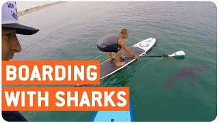 Paddle Boarders Swim With Great Whites | SUP Sharks?