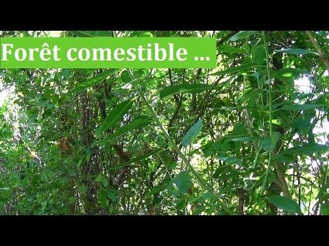 For t comestible biodiversit et luminosit youtube for Jardin foret