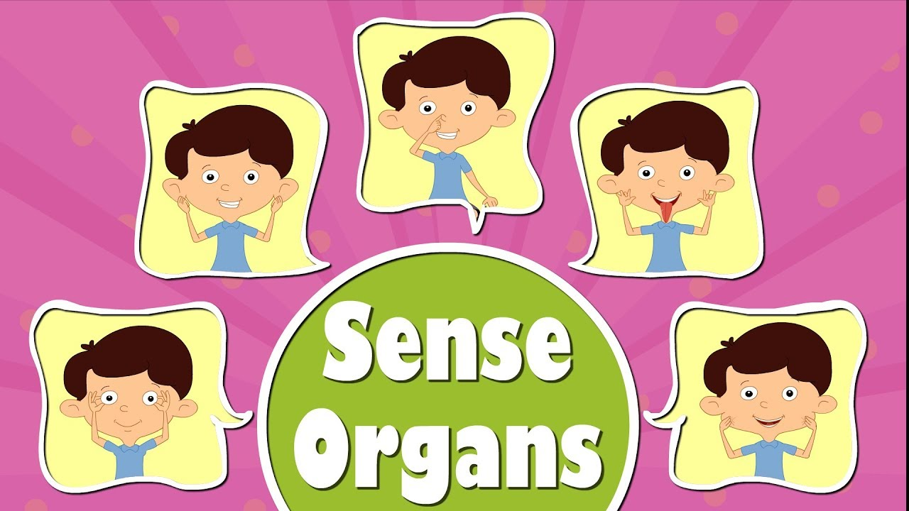 human sense organs videos for kids