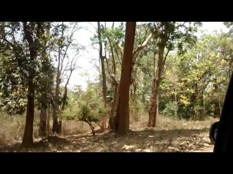 Nagarhole national park 2