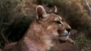 Потрясающе красивый видео клип Природа!