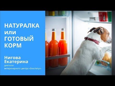 Вопрос: Можно ли собаке давать кошачий корм и наоборот?