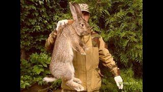 Чем кормить кроликов зимой (Для быстрого роста и набора веса, повышения молочности кроликоматок)