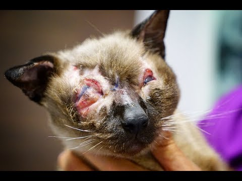 INCREDIBLE! YOU WON´T BELIEVE WHAT THEY DID TO THIS CAT!!