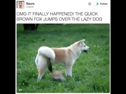 the quick brown fox jumps over Alternatives to: the quick brown fox jumps over the lazy dog 1 pack my box with five dozen liquor jugs 2 several fabulous dixieland jazz groups played with quick tempo.