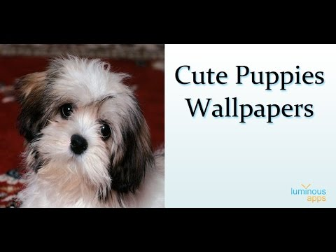 Cute Puppies Live Wallpaper Android App