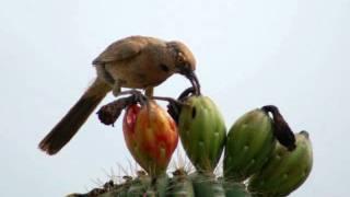 Trabalho de Cincias Aves
