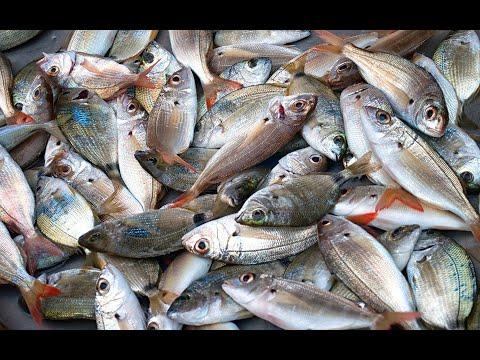 Fish Shop Or Fish Market (Fresh Ocean And River Fish)